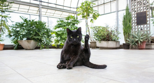 Introducing Feline Folia – Safe Plants for Cats