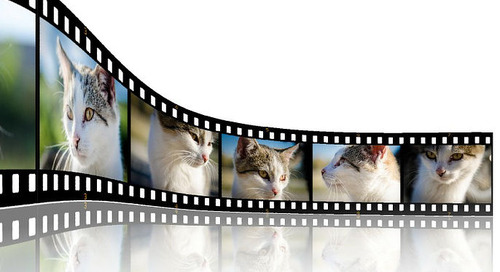 Movie Cats – Which is Your Favorite?