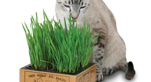 WIN a Kitty's Garden from Pioneer Pet