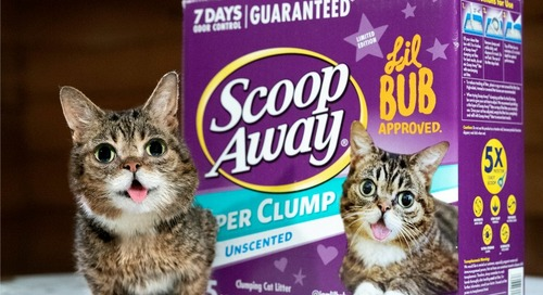 Lil BUB Featured on Scoop Away® Box
