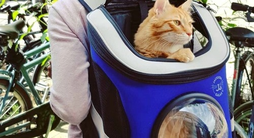 WIN a Jackson Galaxy Convertible Cat Backpack Carrier