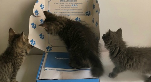 Introducing VetPet Box for Your Cat