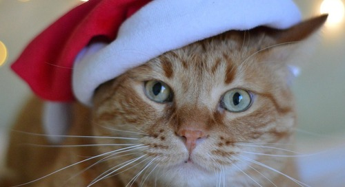 Cat Lovers Holiday Gift Guide 2019