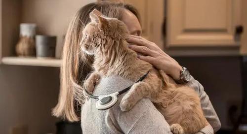 Feline Osteoarthritis – A Non Invasive Treatment Option