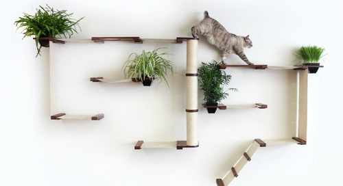 Comment on WIN This Amazing Cat Furniture Complex by james jenkins