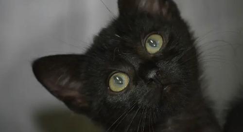 Celebrating the Beauty of Black Cats