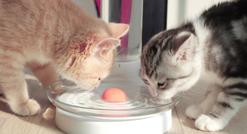 A Clever New Cat Water Fountain