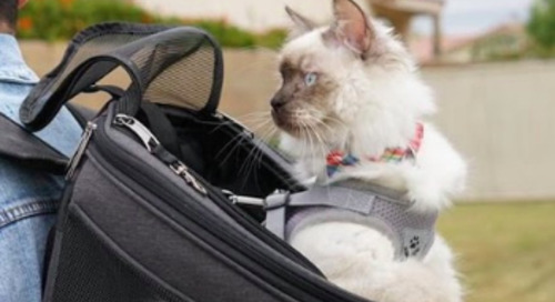 WIN 'The Complete Adventure Cat' Bundle from Your Cat Backpack