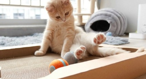 All-in-One Interactive Cat Toy from Cheerble