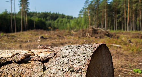 Four reasons to keep focus on deforestation